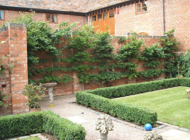 Walled Courtyard Garden with Box Hedging