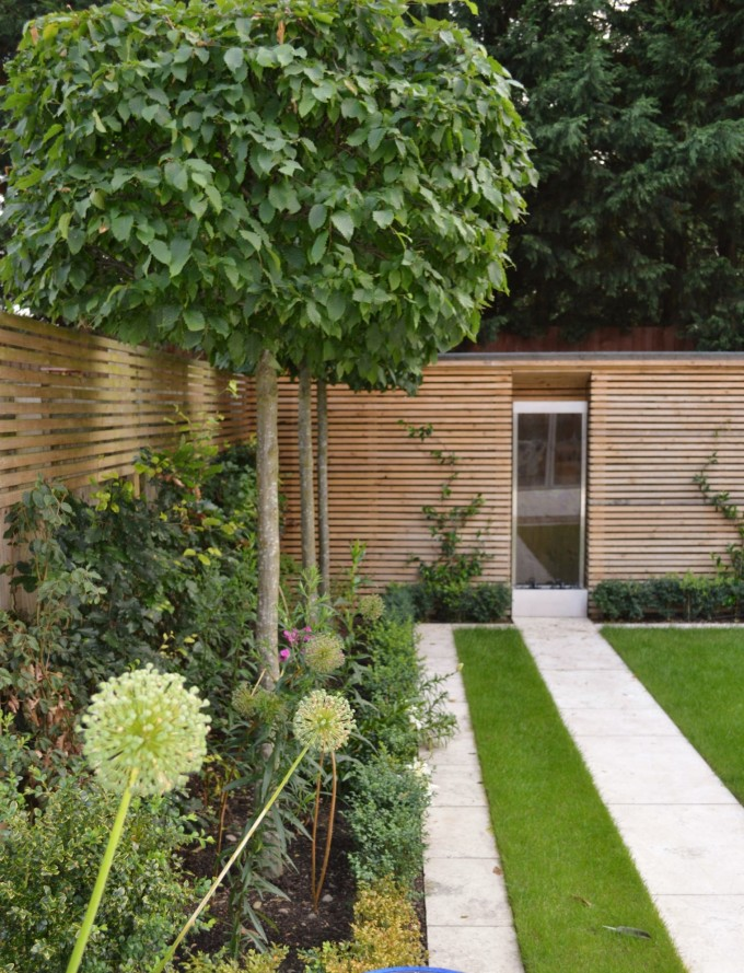 Pleached Trees in Modern Garden